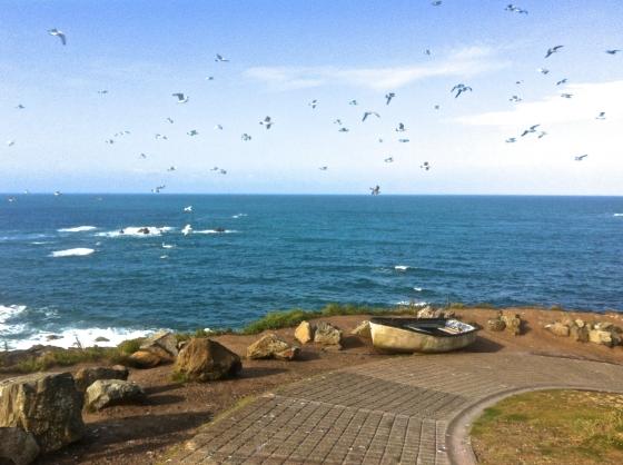 Lizard Seagulls 2