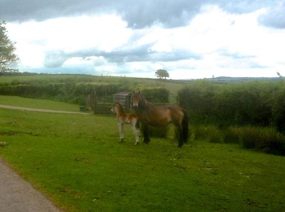 Exmoor National Park 2