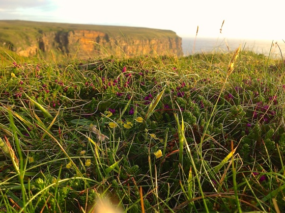 Dunnet Head 9